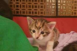 Объявление №36986 : Котята в добрые руки!