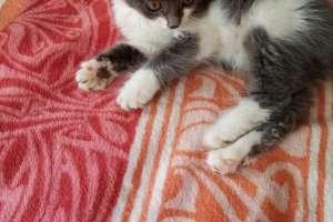 Объявление №37619 : Отдам красивого котёнка в добрые руки